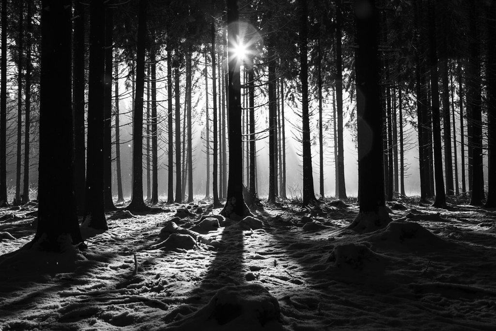 L'hiver 44